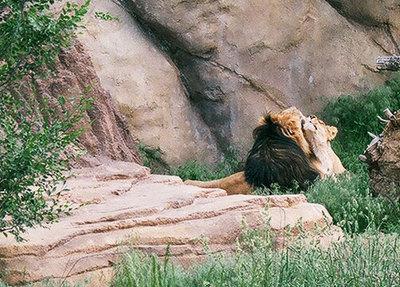 zoo35